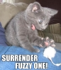 Cat vs Toy Mouse
