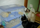 Cats Watching their Prey