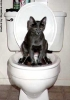Toilet Training DONE
